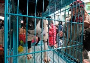Descubren cientos de penes de perros en Taiwán que se usa en bebida para aumentar la libido
