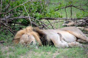 Safaris virtuales, una ventana a la fauna y los paisajes naturales de África en tiempos de coronavirus
