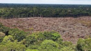 Deforestación en la Amazonia alcanza el mayor nivel en más de 10 años