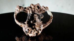 Cómo la vida en la Tierra sobrevivió al asteroide que eliminó a los dinosaurios