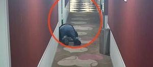 """Capturan a un chinito pervertido gateando por las puertas de un hotel para escuchar a parejas haciendo """"cuchi cuchi"""" (FOTO)"""