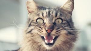 ¡Insólito! Una gata enloqueció y mantuvo a su dueña encerrada en la cocina por dos días
