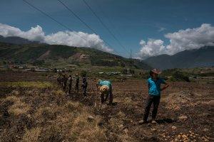 Agricultores venezolanos anuncian quiebra por falta de combustible