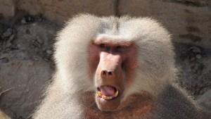 SAPE GATO: Se lanzó de un cuarto piso porque le tenía miedo a un mono (VIDEO)