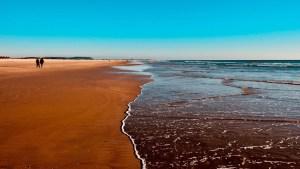 ¿Qué será? Intriga en las redes por el hallazgo de un animal extraño en las playas de Australia (FOTO)