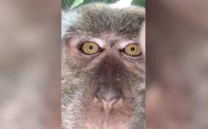 Lo mejor que verás hoy: Mono travieso robó un celular, se grabó y el resultado se hizo viral (Fotos y Video)