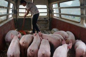 China podría quedarse sin reservas de carne de cerdo dentro dos o tres meses