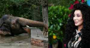 Cher viaja a Pakistán para despedir al elefante al que trabajó para liberar
