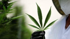 """La ONU eliminó al cannabis de la categoría """"drogas más peligrosas"""""""