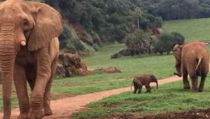 Una elefanta mata a un trabajador de un zoológico en España