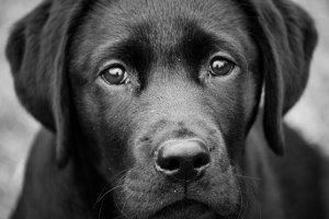 Si tu perro se queda sordo podría pensar que todo el mundo dejó de hablarle