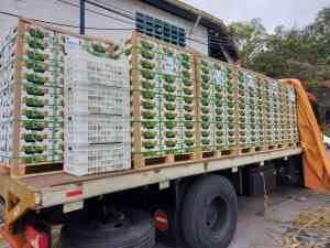 Por primera vez una empresa venezolana exportó mangos a Dubái