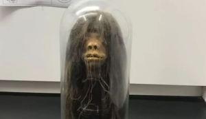 Creyeron haber utilizado un objeto de utilería para una película, pero era una cabeza real (Fotos)