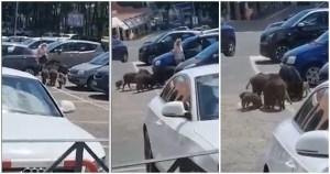 """Una manada de jabalíes acorraló y """"robó"""" a una mujer al salir de un supermercado en Roma (VIDEO)"""