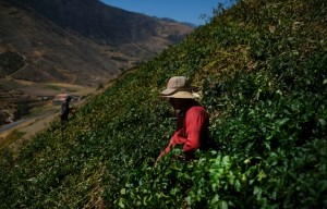 "Sector ganadero venezolano en ""parálisis técnica"""
