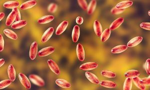 Peligrosa y extraña plaga que se propaga en varias ciudades de EEUU causó la muerte de una niña