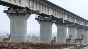 Enorme proyecto ferroviario de China en Kenia tendrá graves efectos medioambientales