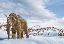 ¿Salvar la Tierra resucitando mamuts? La estrategia de unos científicos para combatir el cambio climático